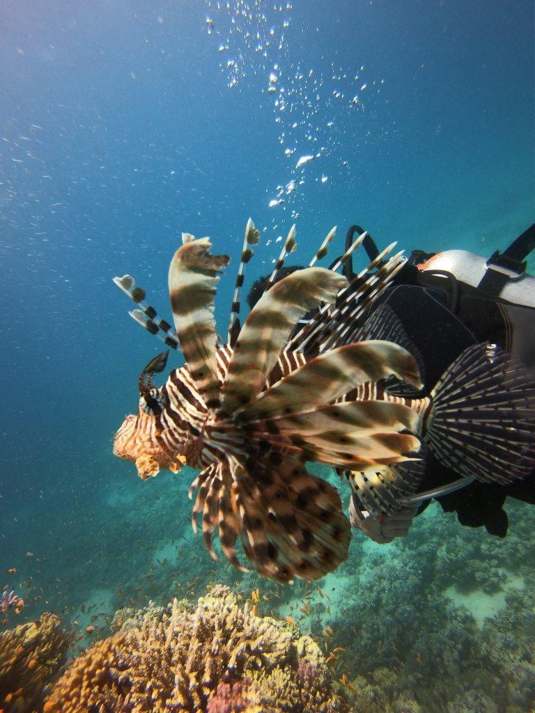 sukeldumine Egiptuses
