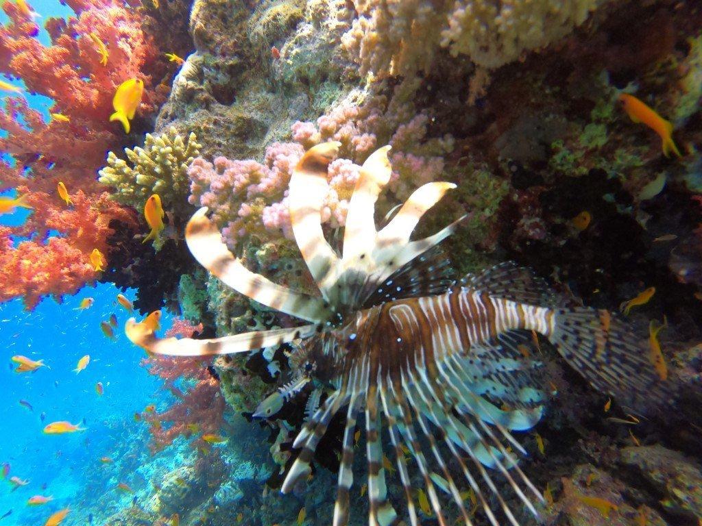 korallriffid Egiptuses